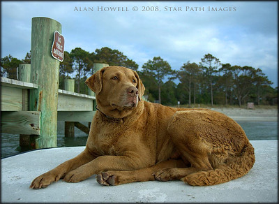 'Storm' the faithful guide dog.