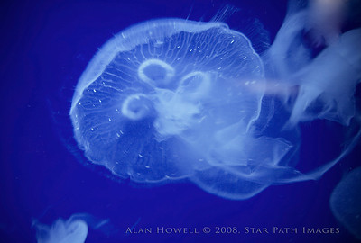 It's either a space alien or a jellyfish...we may never know.