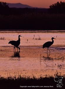 Sandhill Crane Silhouette 2