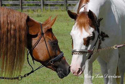 120809-horses-113b