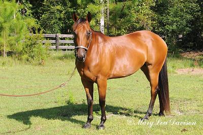 120810-horses-173m