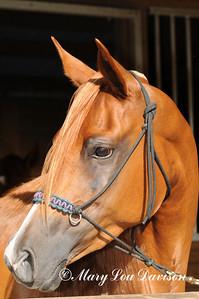 120810-horses-133p
