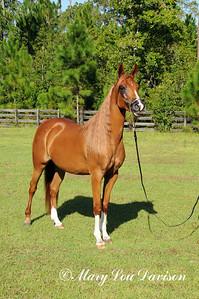 120810-horses-155s