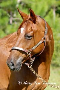 120809-horses-091r