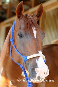 120810-horses-131s