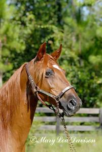 120809-horses-098r