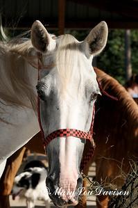 120810-horses-135pp