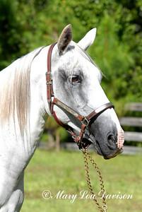 120809-horses-084pp