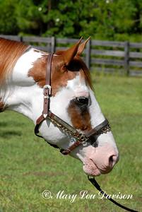 120809-horses-118b