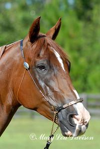 120809-horses-073s