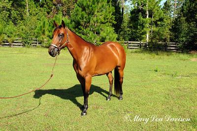 120810-horses-201m