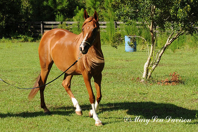 120810-horses-147s