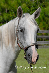 120809-horses-081pp
