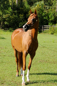120810-horses-152s