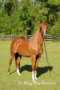 120810-horses-159s