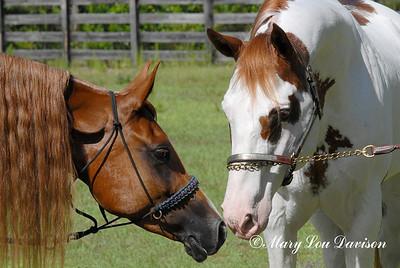 120809-horses-114b