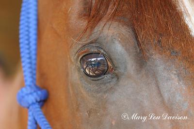 120810-horses-128s