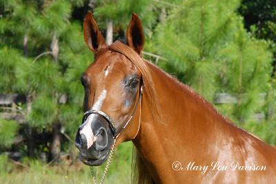 120809-horses-015p