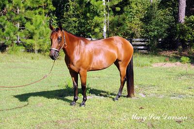 120810-horses-178m
