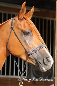 120810-horses-134p