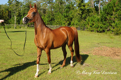 120810-horses-168s