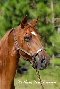 120809-horses-102r
