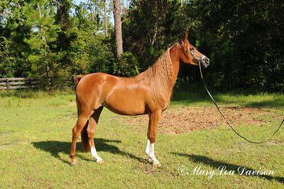 120810-horses-163s