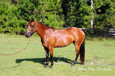 120810-horses-181m