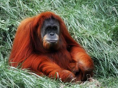 Cincinnati Zoo 2006