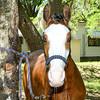 STAR-Performance_Equestrian-20-lr