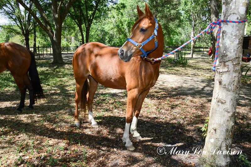 STAR-Performance_Equestrian-34-lr