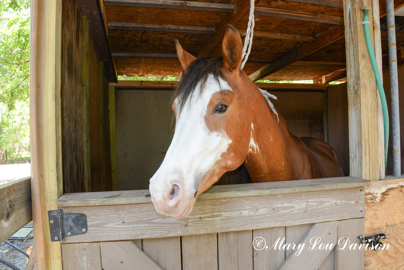 STAR-Performance_Equestrian-11-lr