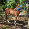 STAR-Performance_Equestrian-35-lr