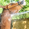 STAR-Performance_Equestrian-19-lr