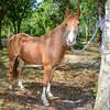 STAR-Performance_Equestrian-32-lr