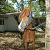 STAR-Performance_Equestrian-36-lr