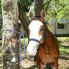 STAR-Performance_Equestrian-21-lr