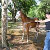 STAR-Performance_Equestrian-16-lr