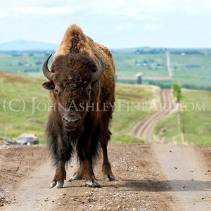 """Montana Traffic Jam"""