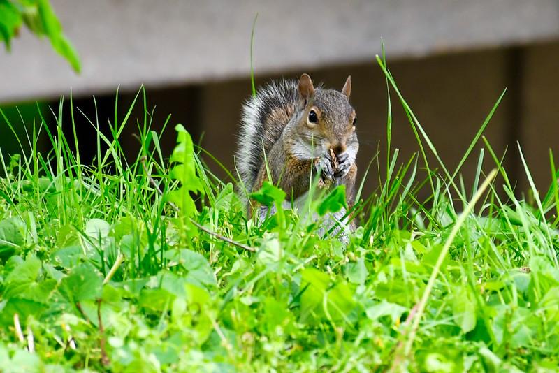 Sly Squirrel