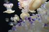 Jellyfish Gems