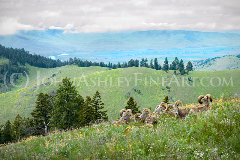 """Mountainside Retreat"""