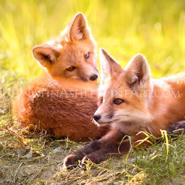 """Foxy Eyes"""