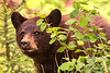 """""""Bearly There."""""""