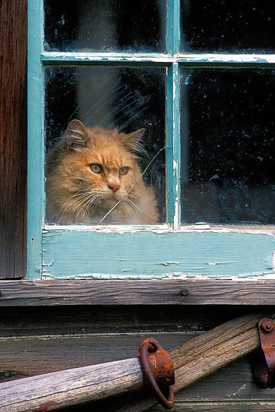 #51 Barn Cat