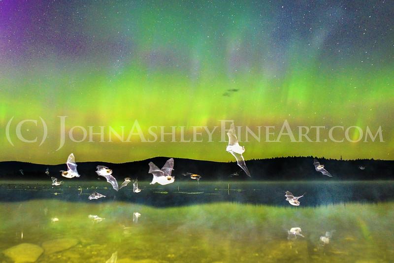 Batty Aurora Reflections