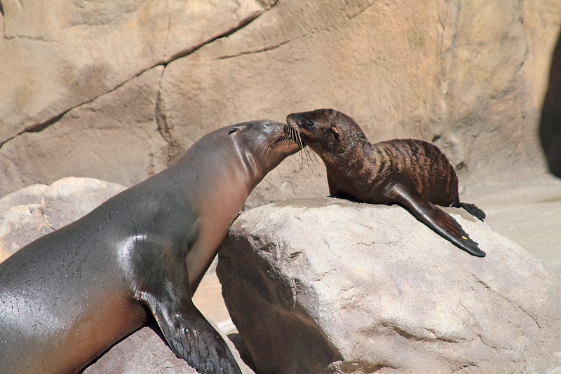 Sea Lion Mama and Baby
