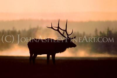 """""""Elk Mist."""""""