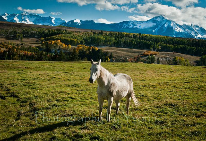 Horse in autumn near Telluride