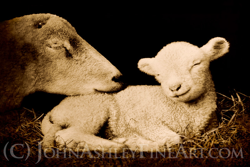 """Peaceful Lamb."""